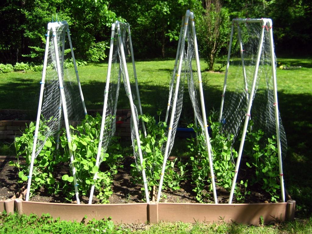 Pvc pea trellises survival punk for Wire garden trellis designs